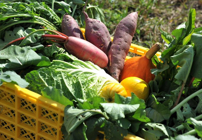 販売する野菜の品目は学生自ら企画