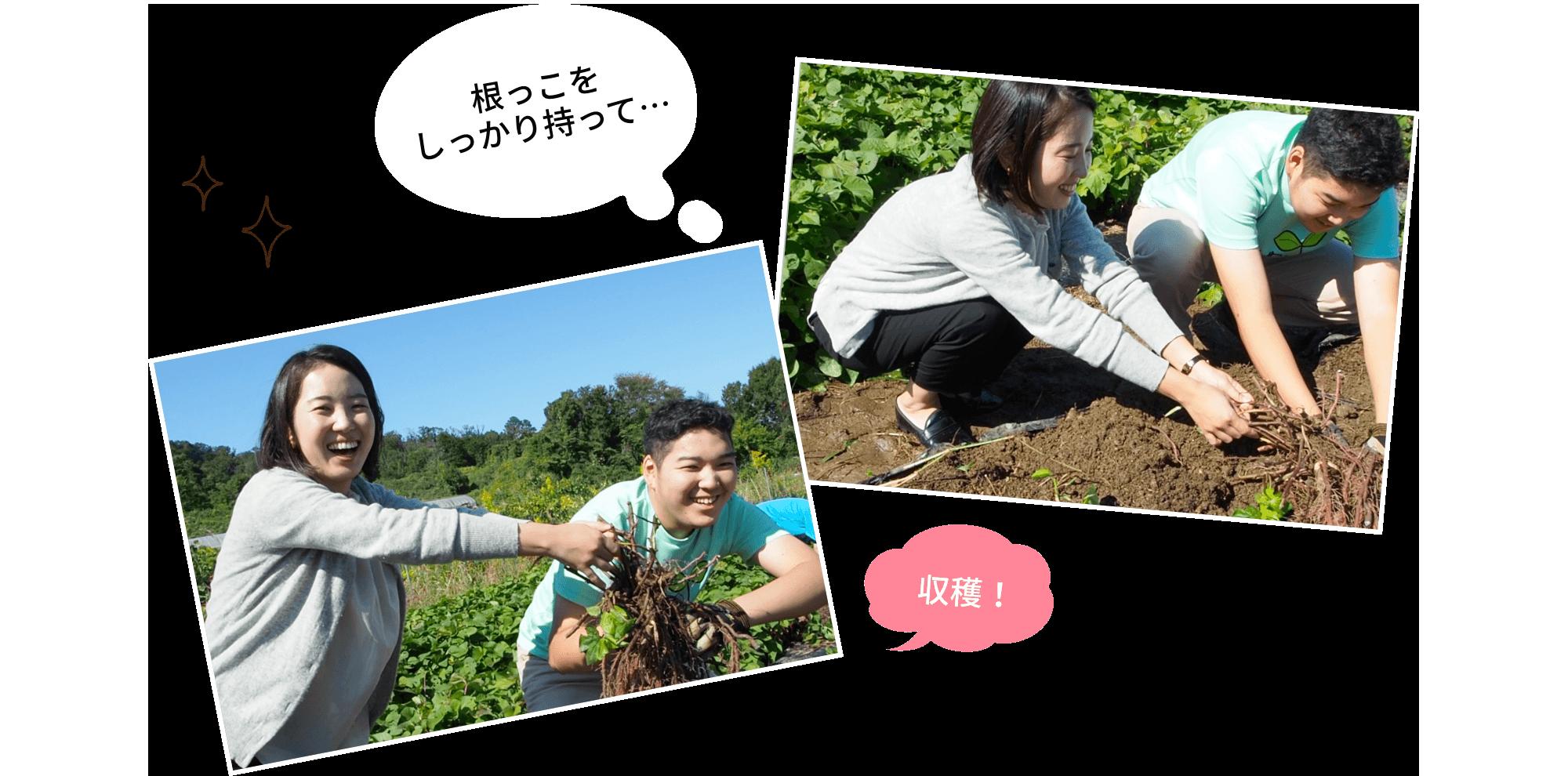 レタスの苗植えスタート!